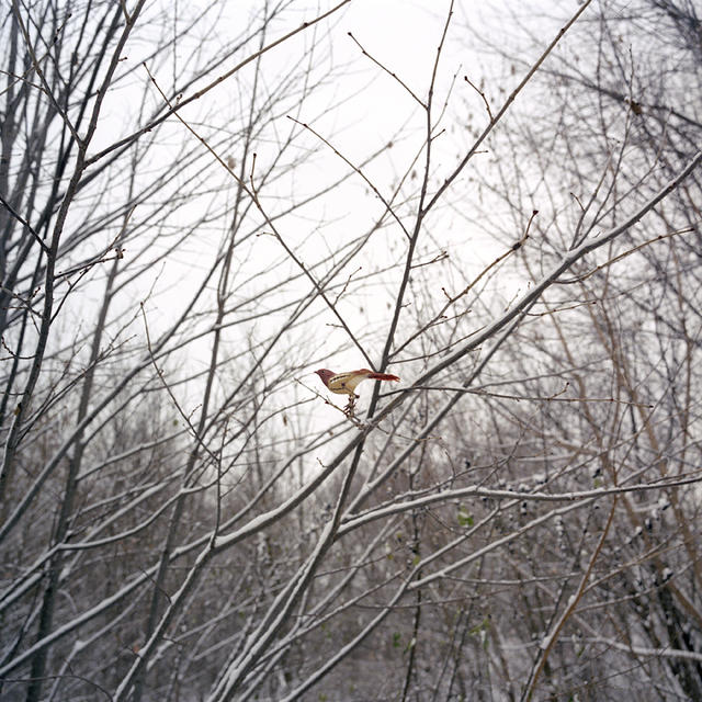 Paula McCartney: Song Sparrow: Courtesy the artist and Klompching Gallery, Brooklyn, NY.