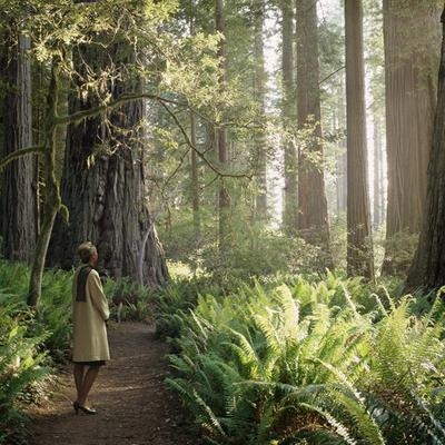 Karin Bubas: Woman in Redwood Forest (2006): Archival pigment print, from the series Studies in Landscapes and Wardrobe.
